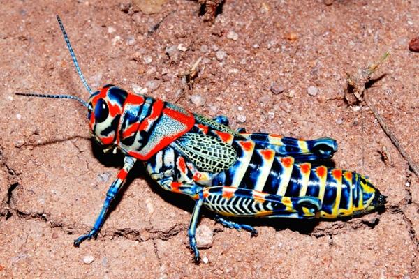 arthropod links museum of southwestern biology the university